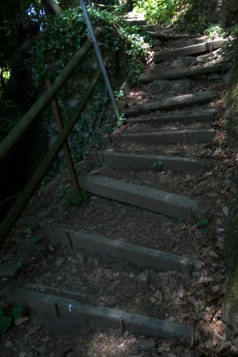 Wurzel Treppen Wandern Bennat Life